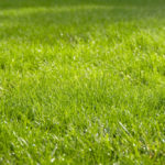 An Honest Review Of Spray-on Grass Seed