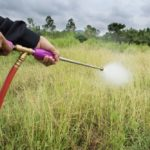 Does Bleach Kill Weeds? How To Use Bleach In Your Backyard